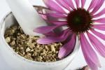 Echinacea, benefici e proprietà terapeutiche